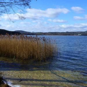 Kemp v Doksech na břehu Máchova jezera